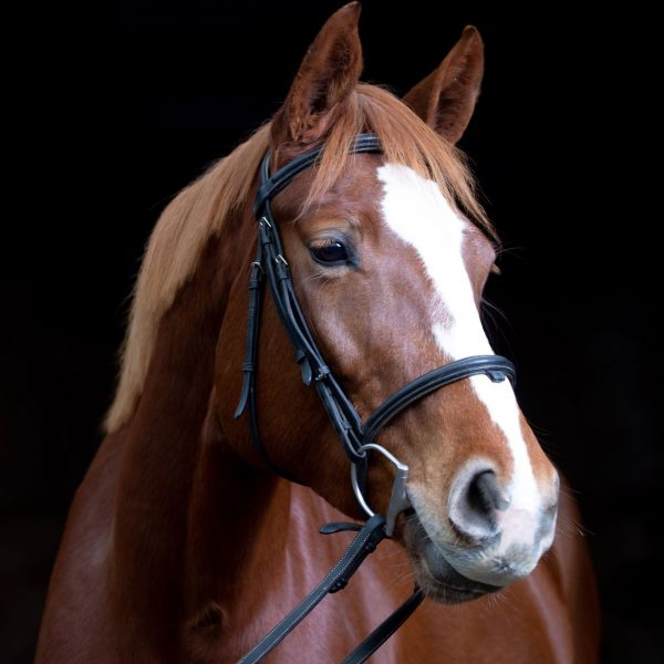 elektra-littoral-cheval-a-vendre-ecuries-maxime-david-ares-arcachon