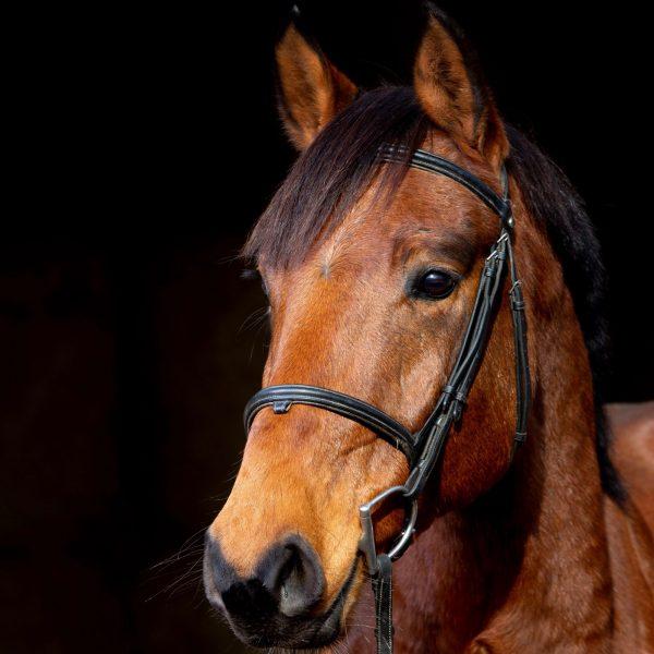 elton-littoral-cheval-de-sport-a-vendre-ares-arcachon